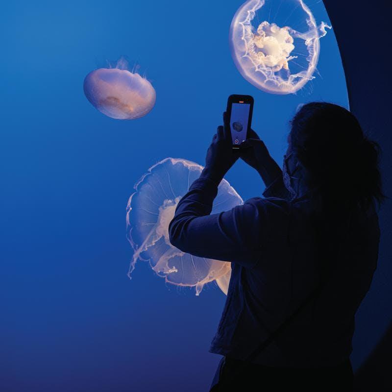 jellyfish exhibit at Monterey Bay Aquarium