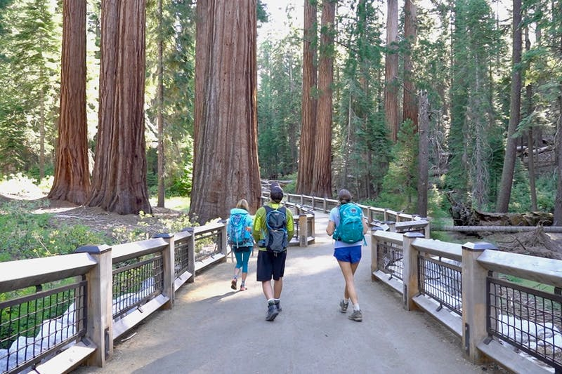 hikers in sequoia redwoods at Mariposa Grove