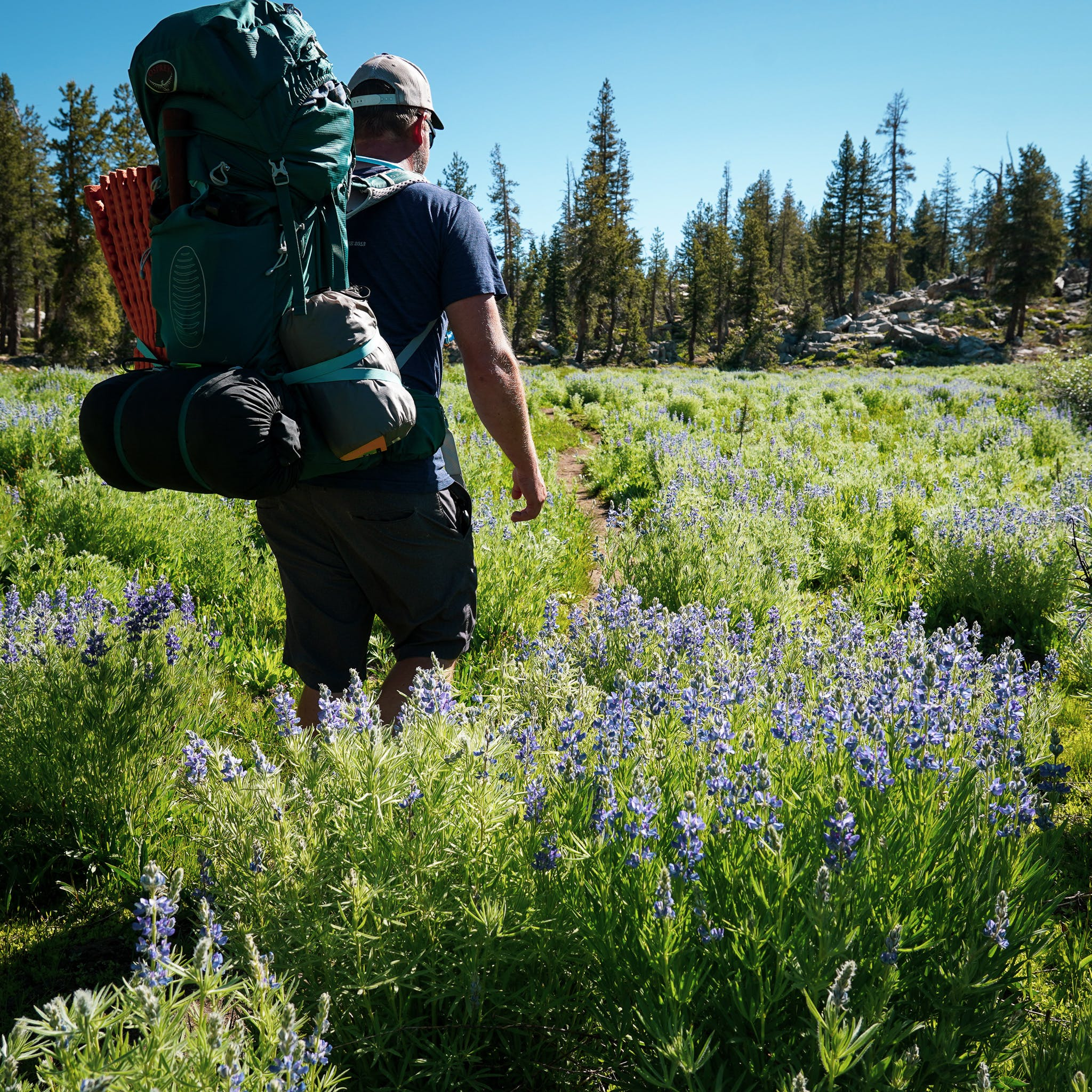 wildflowers and hiker in the Emigrant Wilderness
