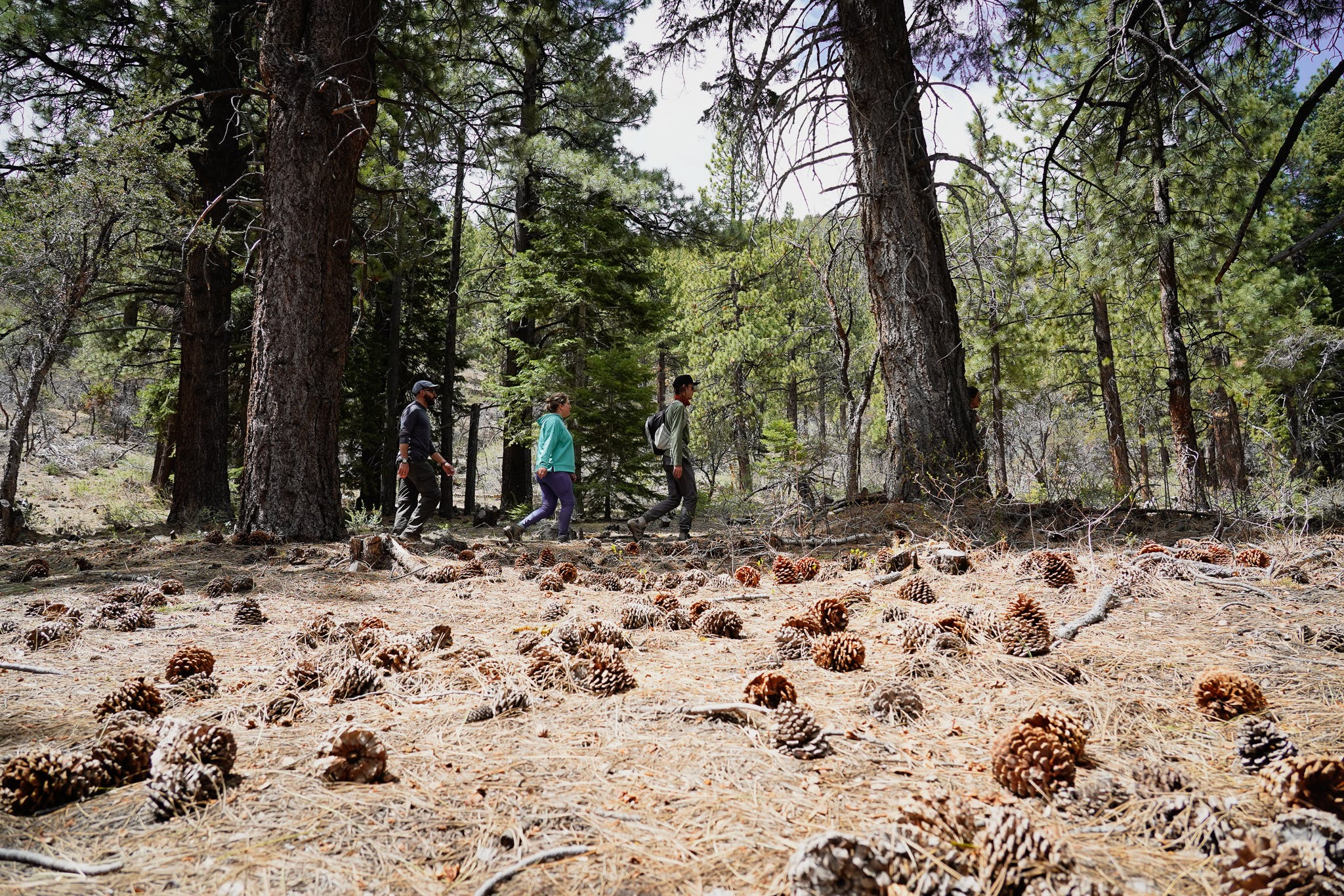 hikers on the Thomas Creek Trail in Mount Rose Wilderness Reno