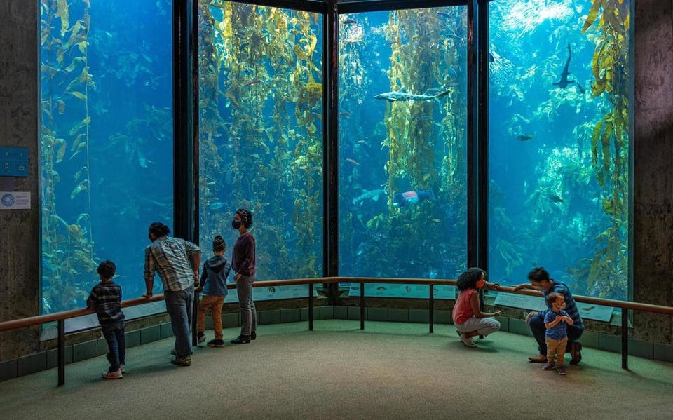 Kelp forest at Monterey Bay Aquarium