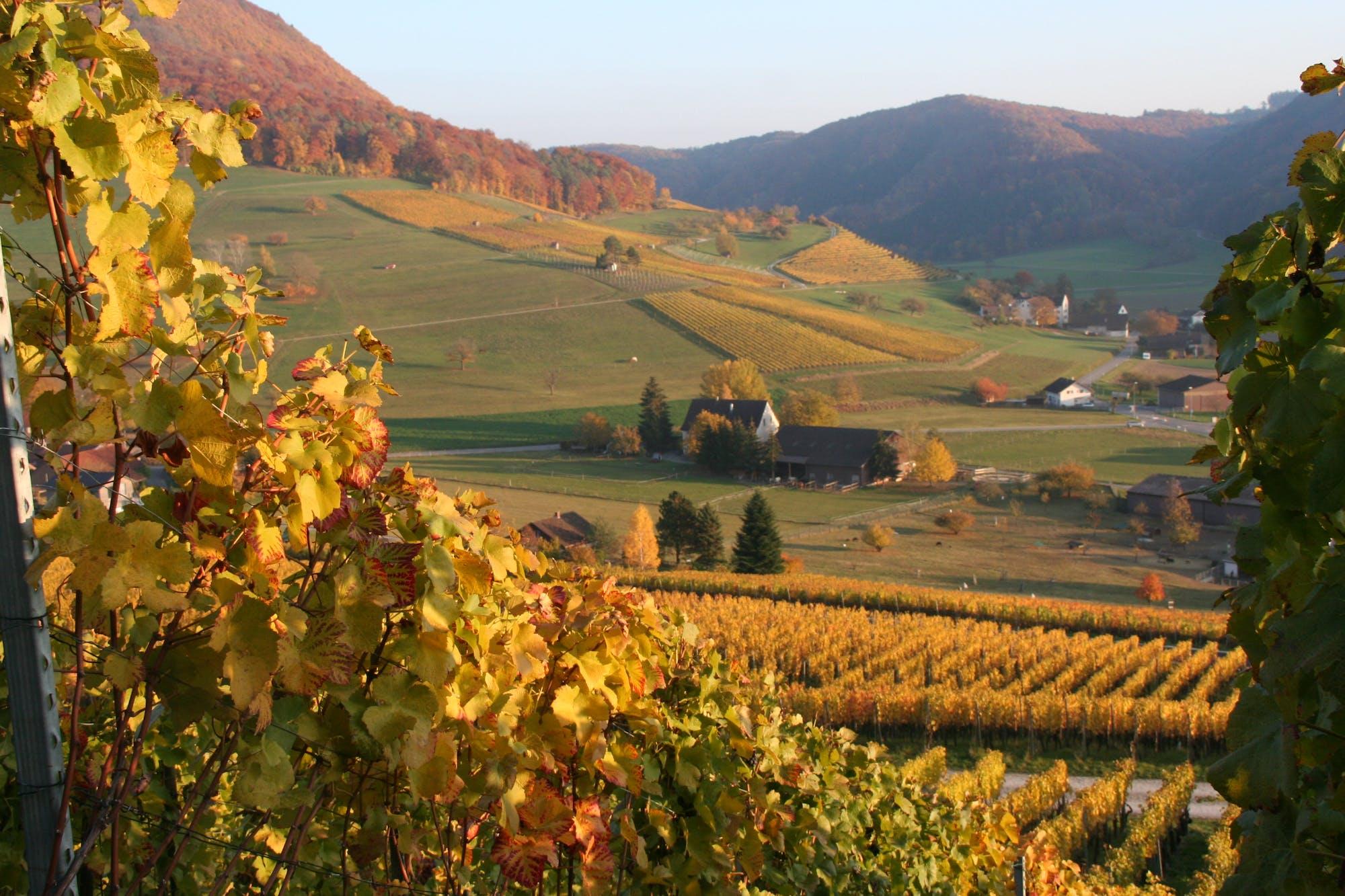 Willkommen im Weingut Stoll