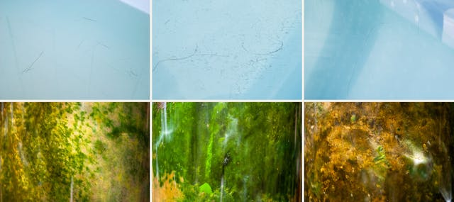 Photographic sextych made up of two rows of three images. The top row of images show close-up abstract images of a bathtub containing water and human hairs, soap and skin scum. The overall tone of the images is a light blue. Shadow lines and reflections cover the images. The bottom row of images show close-up underwater scenes from nature, rock, algae, fungal growth and plant life . The overall tones are greens, yellows, browns and oranges.