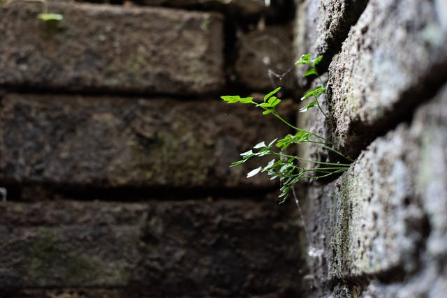 Photograph of a close-up of the corner of a brick wall. The image has a very shallow depth of field. In focus to the right of the frame are a series of long green sprouting stems with green leaves at the end, facing upwards towards the light. Out of focus and in the background, the web of a spider can just be seen.