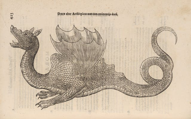 Photograph of a woodcut illustration in a 17th century early printed book, depicting a dragon.