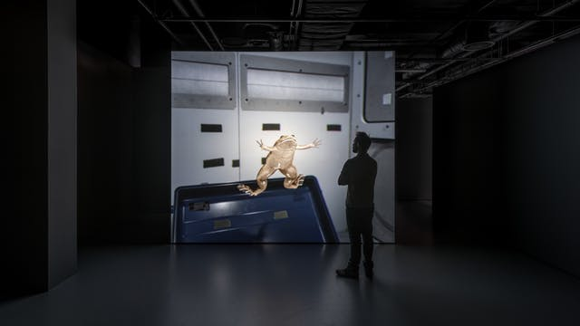 Photograph of a young man looking at a video installation, part of the exhibition, Electricity: The Spark of Life at Wellcome Collection.