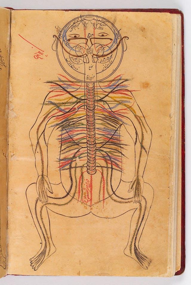 Image of Avicenna anatomy