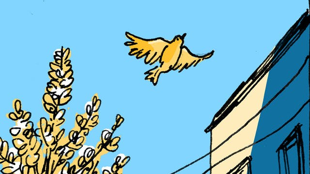 drawing of a bird flying in the sky.