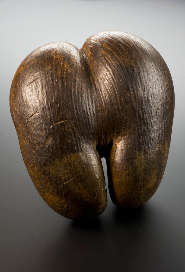 Image of shiny brown nut