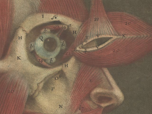 Close-up of a colour engraving of the muscles of the face showing the texture and different layers of colour used to create colour and tone.