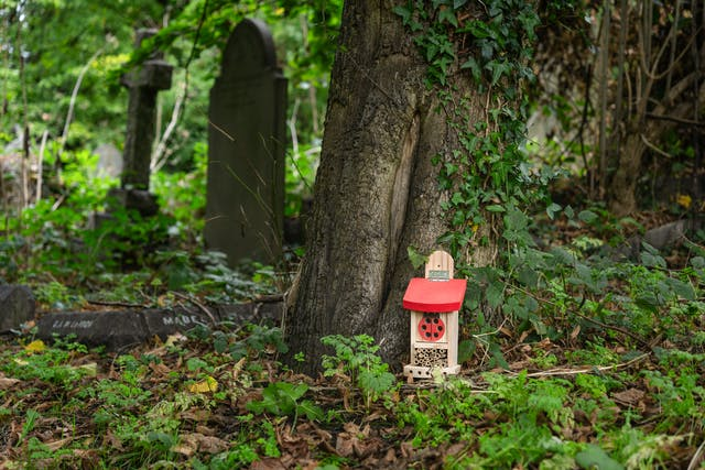 Photograph of an insect hibernation house sitting within the surroundings of a cemetery, with grave stones and ivy.