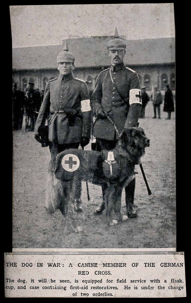 Two soldiers standing side to side with a rescue dog on a leash.