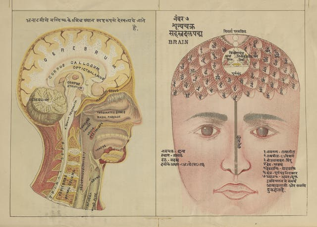 This colour illustration juxtaposes the yogic and the medical/anatomical view of the brain.