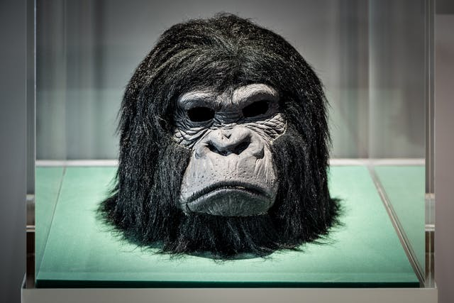 Photograph of the head from the gorilla costume worn by Derren Brown, in a display case as part of the Smoke and Mirrors exhibition at Wellcome Collection.