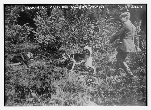 A black and white picture of a dog held by a soldier on a leash, leading him towards a man on the ground.