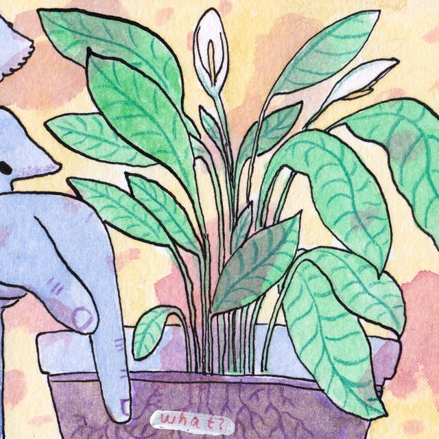 A slice of Roots comic by Rob Bidder. A figure is checking the soil of a houseplant with their finger.