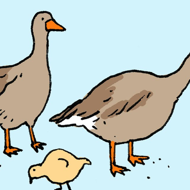 Two geese with a baby chick.