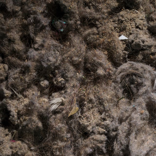 Photograph of a close up of the contents of a vacuum cleaner bag, showing dust, human hairs and other pieces of dirt.