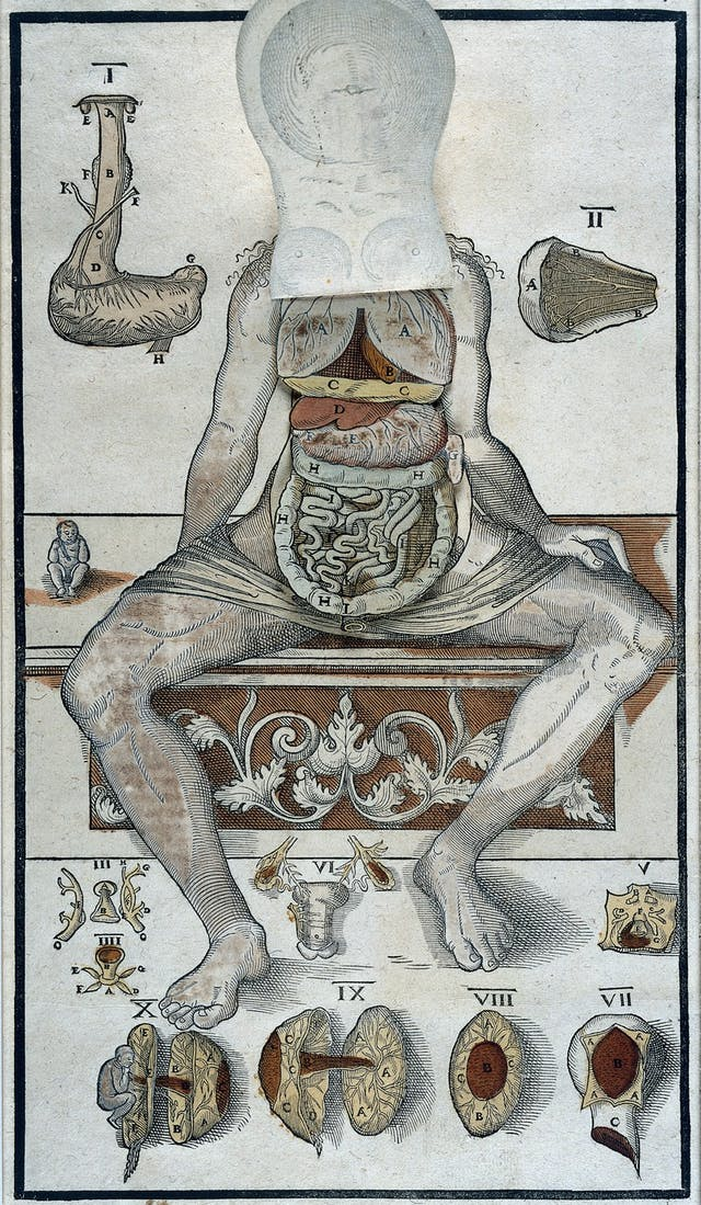 Image of old anatomical etching of human female with flaps of paper to reveal internal organs