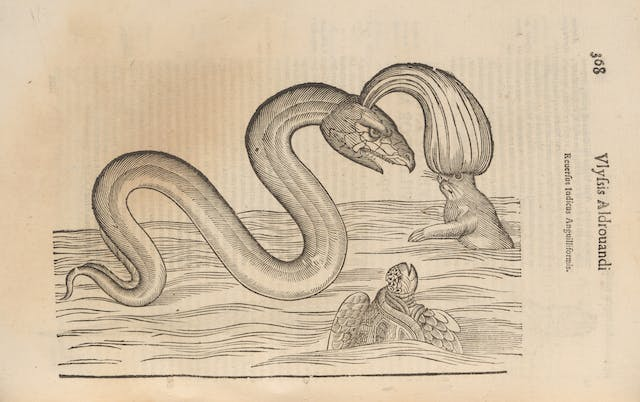 Photograph of a woodcut illustration in a 17th century early printed book, depicting a eel like sea monster.