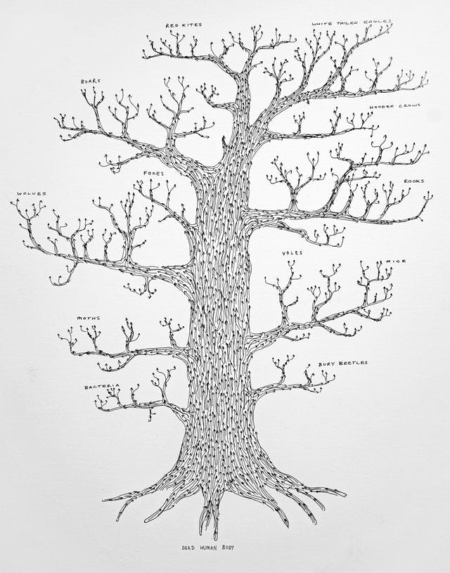 Pen and ink illustration on white textured paper. The illustration depicts a tree with roots, trunk and branches, but no leaves. The form is made up of lots of arrows pointing upwards. At the end of each branch are the names of various insects and animals, such as