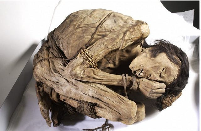 A naturally preserved Peruvian mummified male, possibly from the North coast of Peru where the Chimu culture buried their dead in