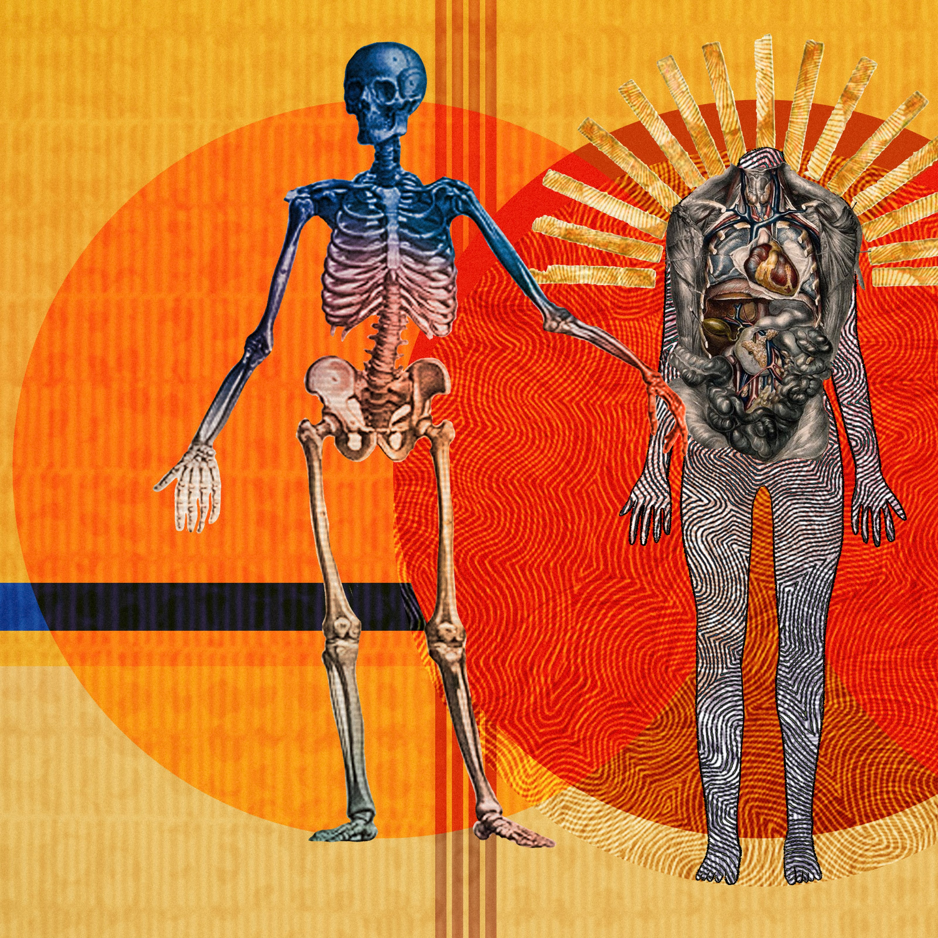 An abstract digital illustration featuring three anatomical depictions of the human body. The first shows the skeletal bone structure, the second reveals the major organs of the body and the third depicts the muscular structure. Circles of energy are shown to be radiating from each of the bodies, overlapping each other. The main colour combinations are yellows, reds and oranges. The background shapes contain textures and patterns.