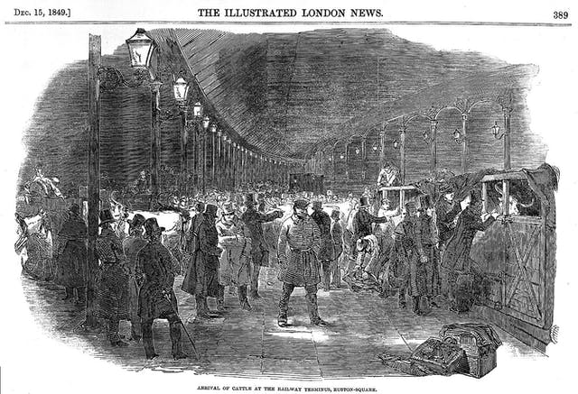 Illustration from the Illustrated London News showing a crowded train platform at Euston Square station.  Cattle are being unloaded from crates and led through the crowd.  Text reads