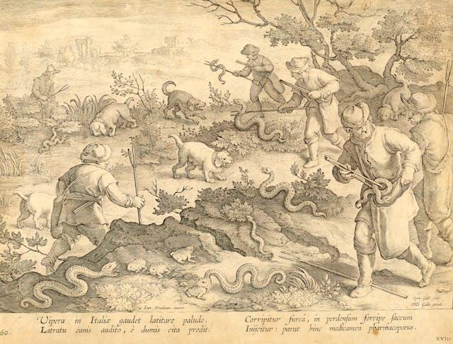 Hunting snakes, ca. 1595; After Jan van der Straet, called Stradanus