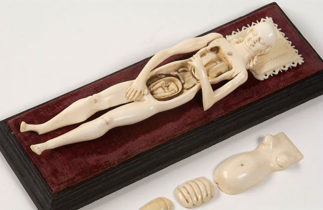 Image of a small ivory model of a woman with removable mid-drift revealing organs and foetus in womb beneath. She lies on red velvet.