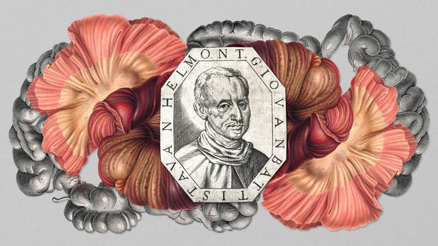 "Digital collage of archival material.  In the centre, an etching of the head and shoulders of a man as he looks towards the viewer.  The frame around the head reads ""Giovanbattista Van Helmont"".  The lozenge shaped portrait is sitting on an illustration of the gut and intestines."