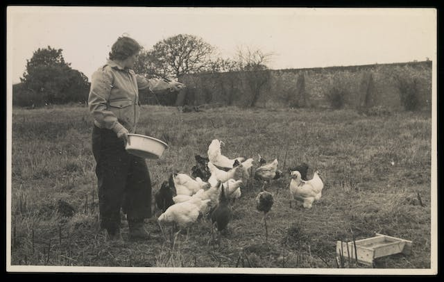 Black and white photograph showing a woman feeding chickens.