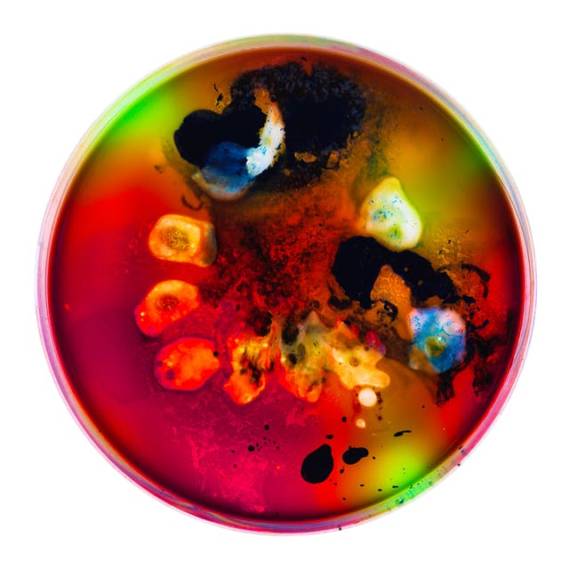 Photograph of a petri dish containing colourful swirls and blotches of blue, yellow, orange, red, green and black spots, made from ink, watercolour, pva and resin.