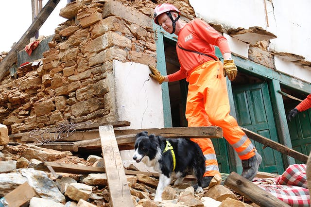 Coloured picture of a fireman and a dog searching through rubble.