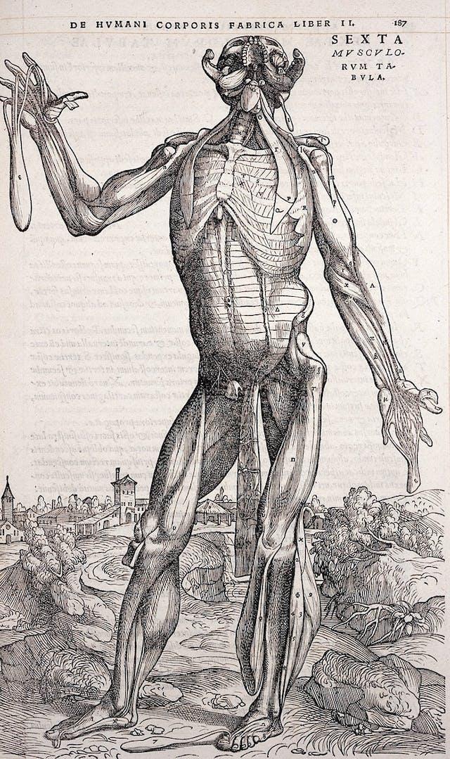 A page from De humani corporis fabrica by Andreas Vesalius (1534)
