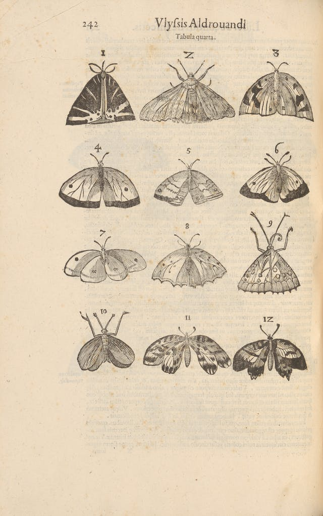 Photograph of woodcut illustrations in a 17th century early printed book, depicting a series of winged insects.
