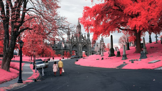 Infrared photograph of the entrance to Green-Wood Cemetery. In the bottom left portion of the image two people are walking towards the Neo-Gothic entrance to Green Wood Cemetary. The road has a series of parked cars of which one has a door open. To the right of the frame there is a large tree towering over several grave stones. The pink hues replacing the greens of the grass and trees are a result of the infrared technique.