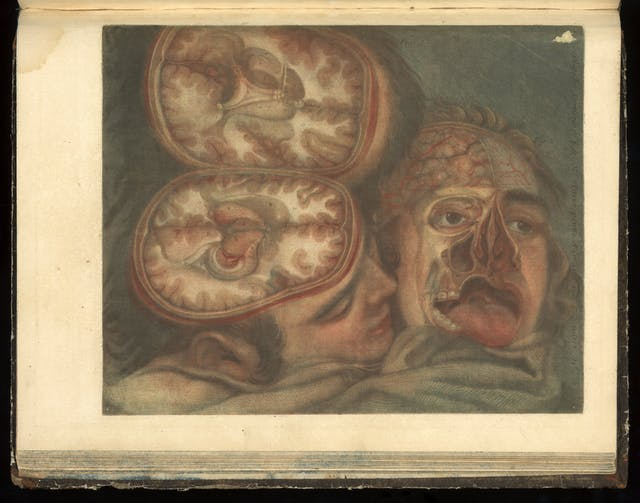Colour engraving of two heads nuzzled together, on the left the head is depicted split open horizontally to display the brain and on the right layers have been cut away to show the inside of the face.