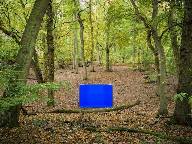 彩色风景照片,显示古代林地的景色。在图像的下中心,空白处是一个大的矩形摄影背景框。整个框架采用活力四射的蓝色chroma key面料。木地板上覆盖着锈色的树叶和落下的树枝。在图片的左右两侧,高大强壮的树干从画面中向上延伸到绿叶的树冠。随着场景逐渐远去,地面上升,树干继续在屏幕周围升起。树木的叶子遮住了整个天空的视线,只在这里和那里有几次明亮的一瞥。
