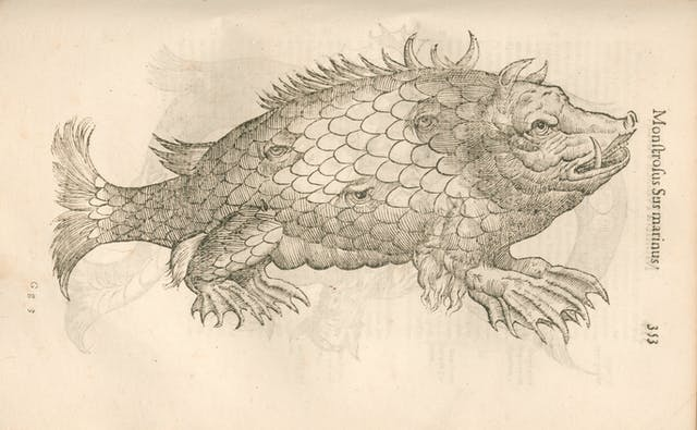Etching of an animal that appears to be part fish (with scales, tail, fins) and part hog (with snout, ears, tusk). There are also three eyes randomly placed across its torso.