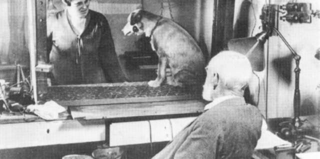A man and a woman in a laboratory look at a dog.