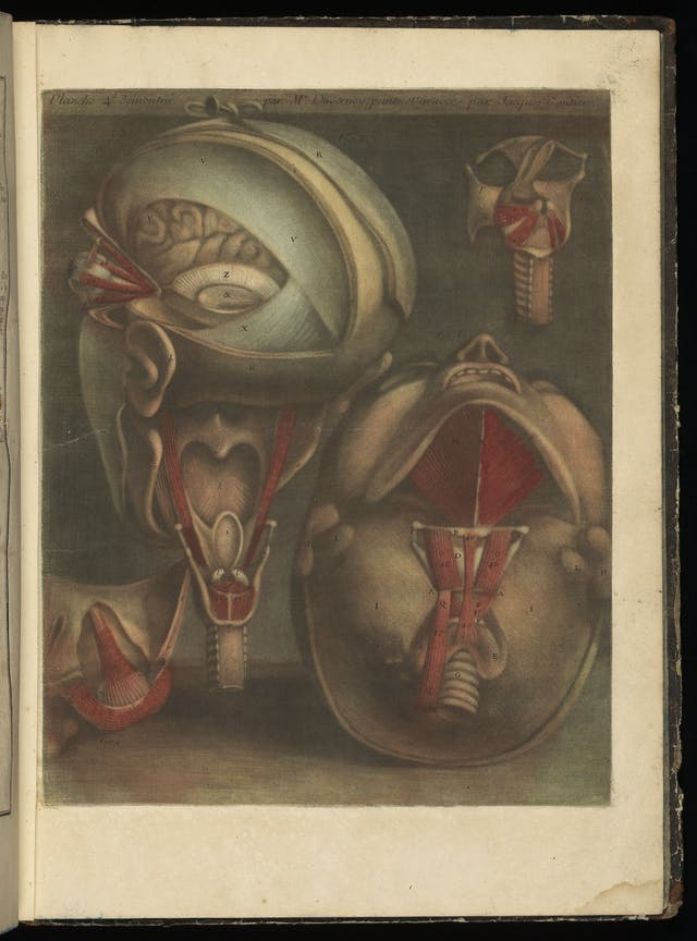 Colour engravings of the human head from behind and below.