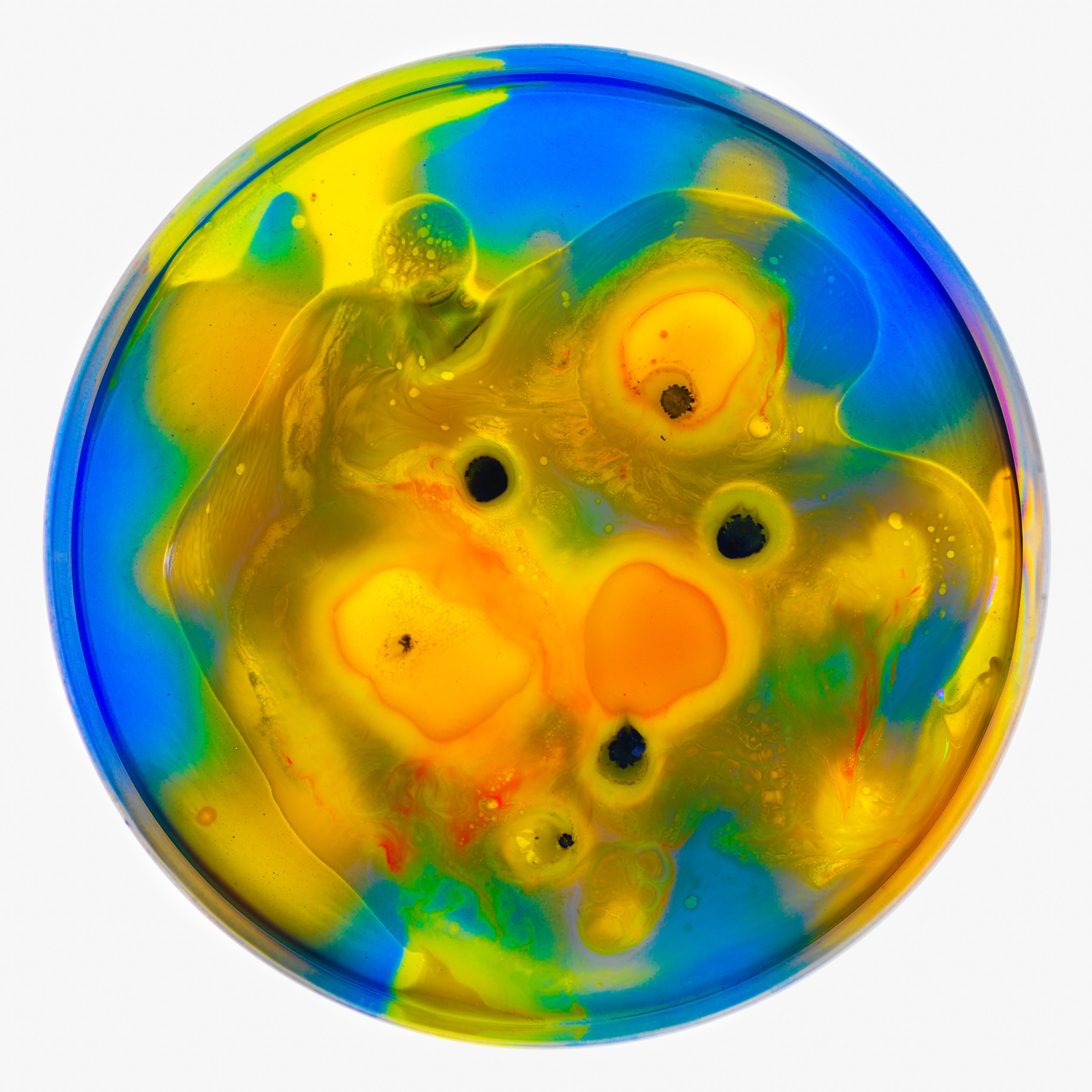 Photograph of a petri dish containing colourful swirls of blue, yellow, orange and black spots, made from ink, watercolour, pva and resin.