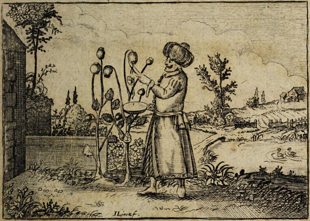 An image from an 18th-century book showing a man in a turban harvesting opium poppies.
