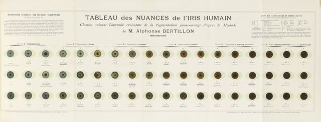 A chart showing 54 differently coloured eyes, organised by colour from blue to dark brown