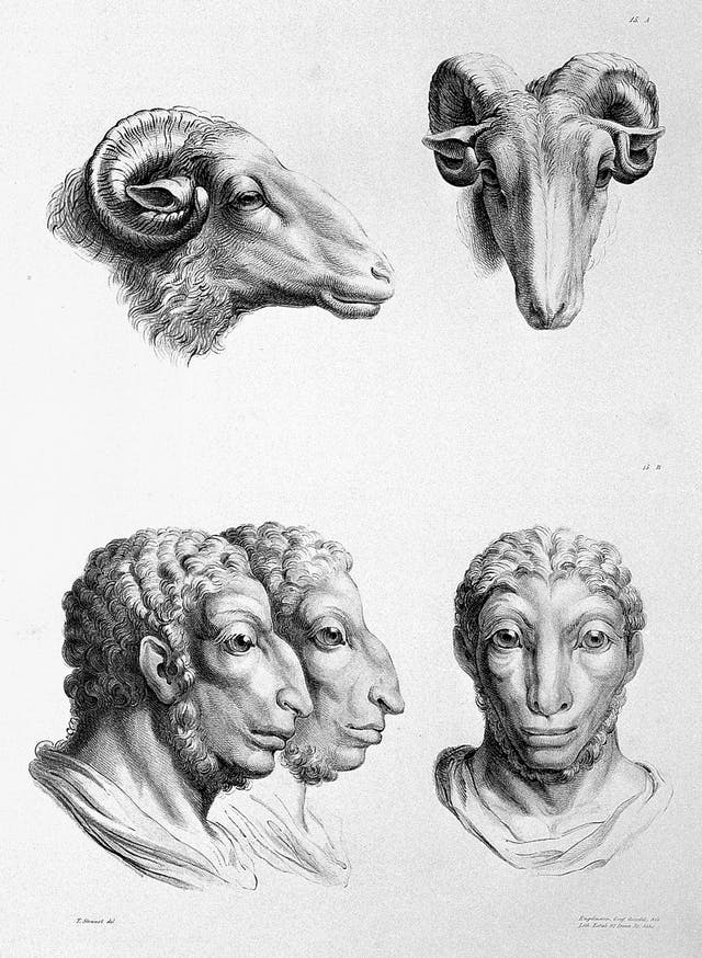 Charles Le Brun, The relation between the human physiognomy and that of the brute creation , 1671