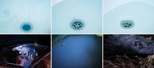 Photographic sextych made up of two rows of three images. The top row of images show close-up abstract images of a bathtub containing water and human hairs, soap and skin scum. The overall tone of the images is a light blue. Shadow lines and reflections cover the images. The bottom row of images show close-up scenes from nature, puddles, leaves, soil, roots, fungal growths and flower heads. The overall tones are blacks, blues and browns.