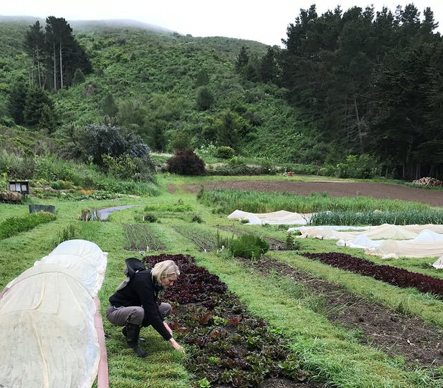 A woman tends to plants in a large vegetable plot.