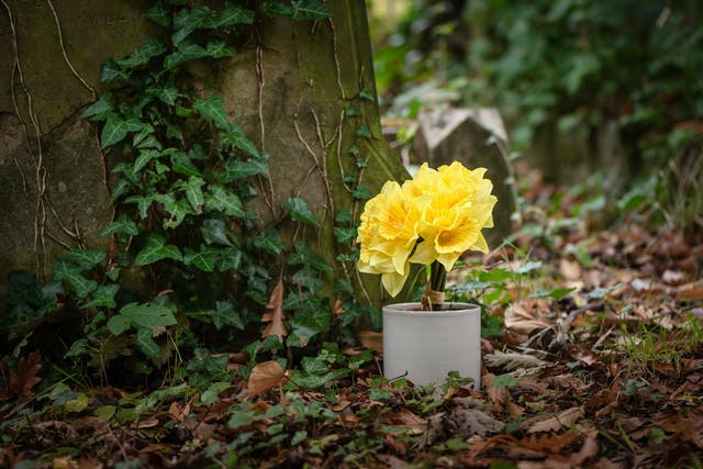Photograph of a pot containing artificial daffodils sitting within the surroundings of a cemetery, with grave stones and ivy.