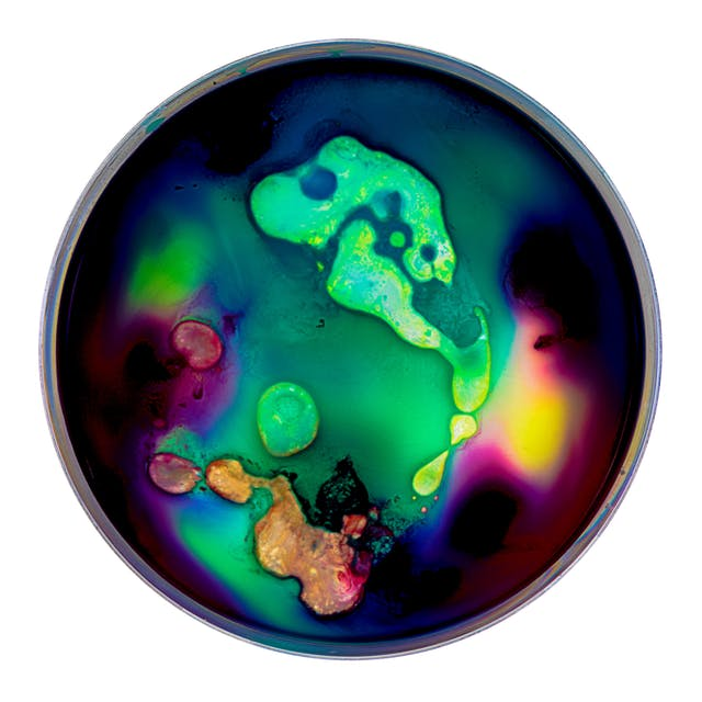 Photograph of a petri dish containing colourful swirls of blue, yellow, orange, purples and violets, made from ink, watercolour, pva and resin.